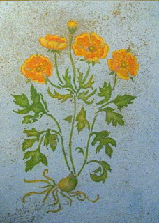 Stencil and foil /get well California Poppy