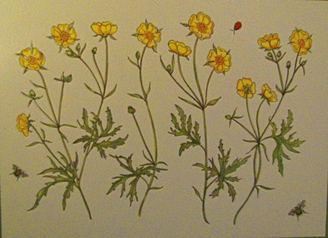 Botanical embossed Buttercups thankyou